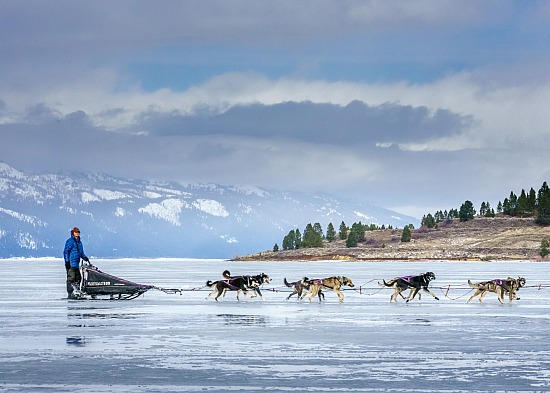SLED DOG RACING   |   Stories from the Idaho Sled Dog Challenge