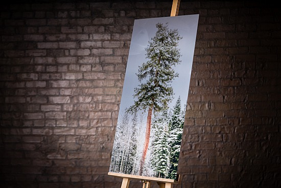 ONE TREE STANDS ALONE - METAL with STAND OUT BACKING FRAME  (20X40 IN)