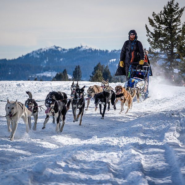 Sled-Dog-Racing